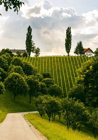 Beautiful landscape of Austrian vineyards in south Styria. Famous Tuscany like place to visit. Scenic view of idyllic Travel destination. Stok Fotoğraf