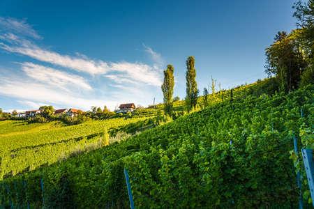 Styrian Tuscany Vineyard in autumn near Weingut Regele in Ewitsch. Tourist spot for wine lovers. Stockfoto