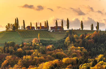 South styria vineyards landscape, Tuscany of Austria. Sunrise in autumn. Colorful trees and vieyard at top of hill with poplar trees