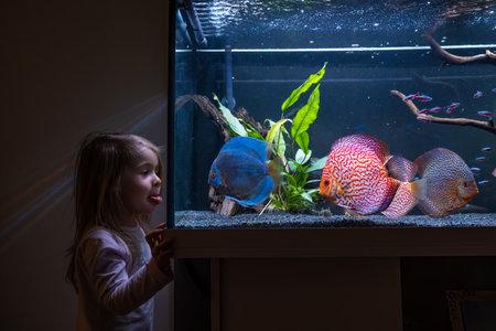2-3 year old child watching fish swiming in big fishtank, aquarium.