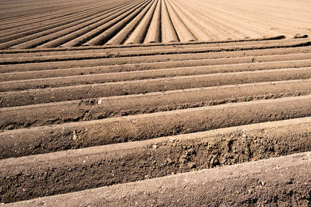 Furrows row pattern in a plowed field prepared for planting crops in spring.