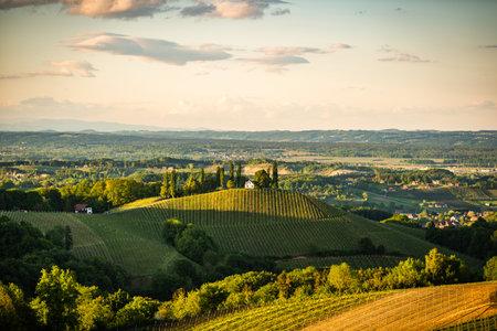 Austria Vineyards Sulztal Leibnitz area south Styria