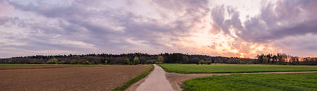 Landscape panorama with road, green corn fields Stock Photo