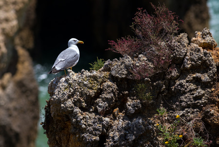 close up view of seagull standing on a rock