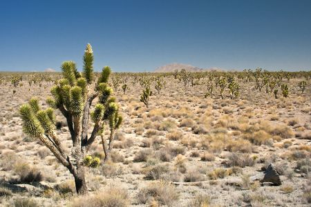 Mojave Desert Joshua Tree California USA Stock Photo - 6483683