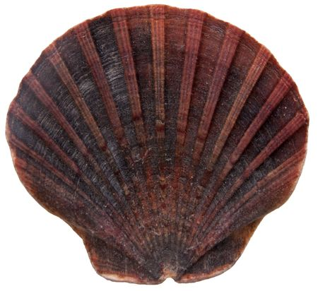 Seashell from tropical Beach isolated item photo