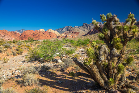 Red Rock Canyon State Park, Nevada, USA photo