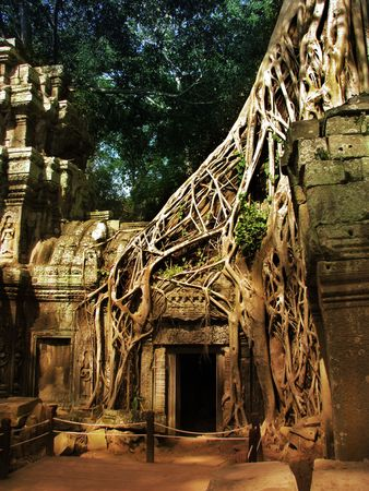 Giant tree covering the stones of the fascinating temple of Ta Prohm in Angkor Wat (Siem Reap, Cambodia). photo