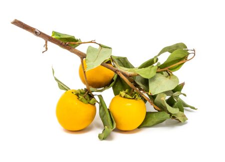 yellow persimmon on branch and leaves Stock Photo