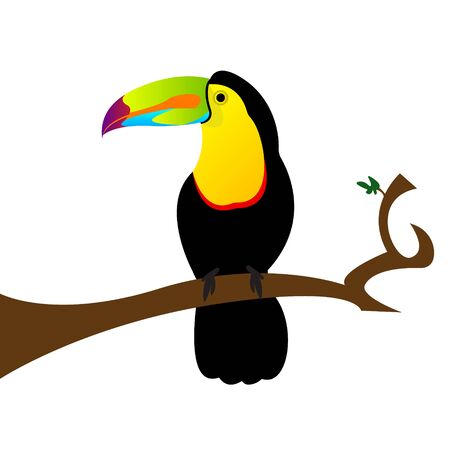 Colorful toucan sitting on a branch, isolated on white background