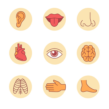 senses: Medical icons thin line set. Human organs, senses, and body parts. Flat style color vector symbols isolated on white.