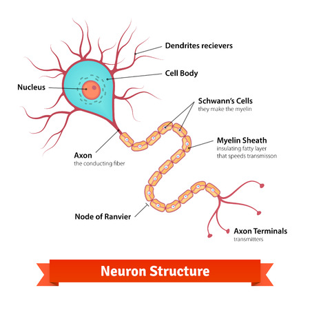 synaptic: Brain neuron cell diagram. Vector colorful illustration.