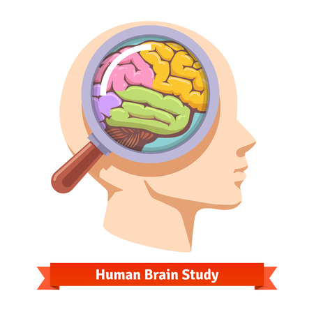 magnyfying glass: Brain research and education concept. Magnifying glass zooming inside human head. Flat vector illustration.