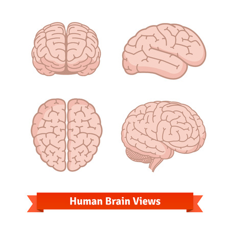 front side: Human brain views. Top, frontal and side view, three-quarter. Flat vector icons.