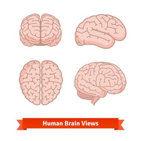 cerebro: vistas cerebro humano. Superior, frontal y lateral, de tres cuartos. Iconos del vector de planos.