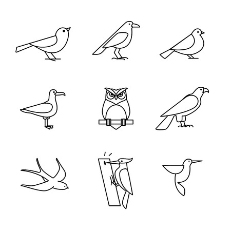 mew: Birds icons thin line art set. Black vector symbols isolated on white. Illustration