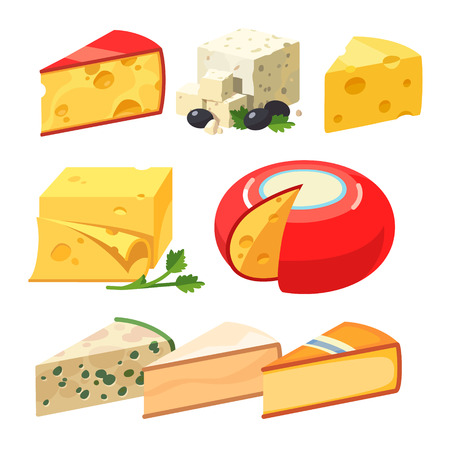 edam: Cheese types. Modern flat style realistic vector illustration icons isolated on white background.