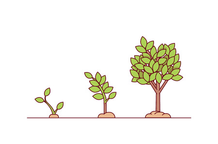 Growing tree seed with green leafs. Young sprouts rising from good fertilised soil. Growth stages. Modern flat style thin line vector illustration isolated on white background Illustration