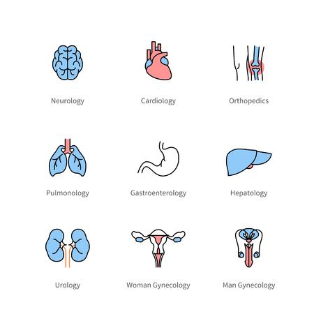 Medicine and medical specialties, human organs Stock Vector - 76640281