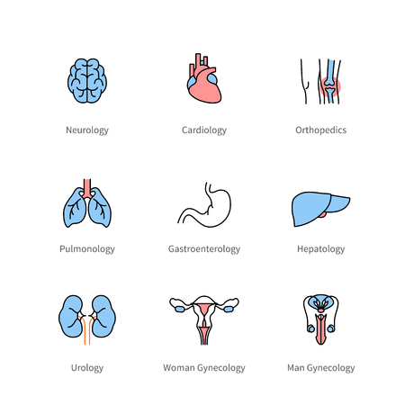 Medicine and medical specialties, human organs
