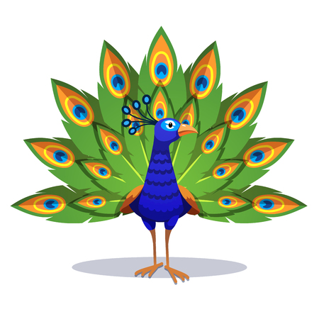 Beautiful peacock standing with green feathers out Ilustração
