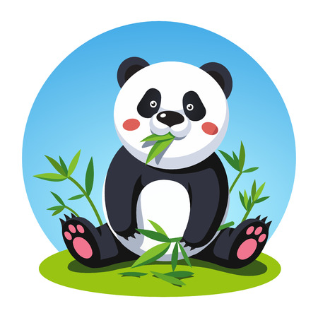 Panda bear sitting and chewing bamboo tree leaves