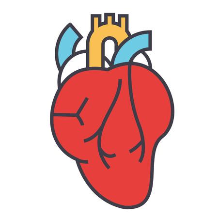 心臓解剖学、心臓病学の概念。行ベクトルのアイコン。編集可能なストローク。白い背景に分離された平面線形図