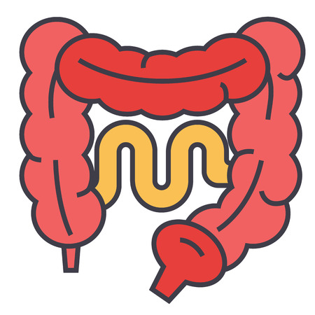 Intestines concept. Line vector icon. Editable stroke. Flat linear illustration isolated on white background