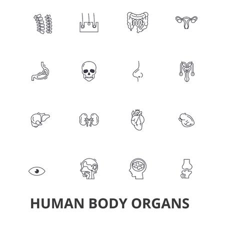 Menselijk lichaam, menselijk lichaam, medisch, menselijke anatomie, lichaamssysteem, lichaamsdeellijnpictogrammen.