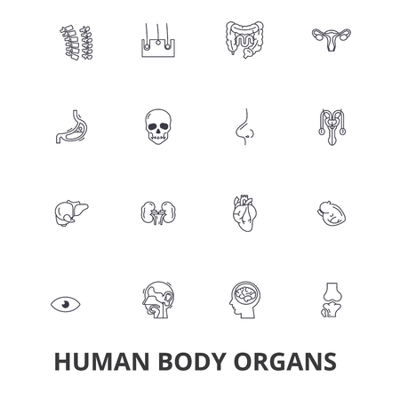 Human body organs, human body, medical, human anatomy, body system, body part line icons.