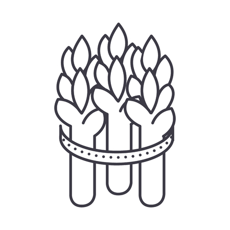asparagus vector line icon, sign, illustration on white background, editable strokes Çizim