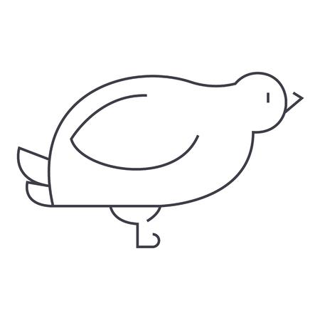 duif, kwartel vector lijn icoon, teken, illustratie op een witte achtergrond, bewerkbare streken