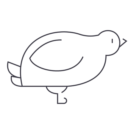dove,quail vector line icon, sign, illustration on white background, editable strokes