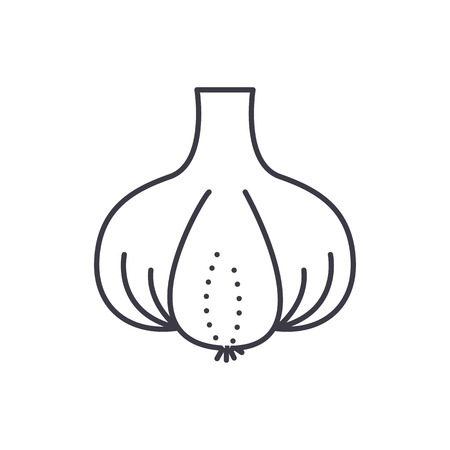 Garlic vector line icon, sign, illustration on white background, editable strokes. Illustration