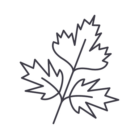 parsley vector line icon, sign, illustration on white background, editable strokes Illustration