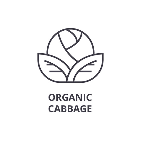 organic cabbage line icon, outline sign, linear symbol, flat vector illustration Vettoriali