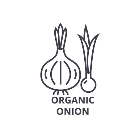 Organic onion line icon, outline sign, linear symbol, flat vector illustration. 向量圖像