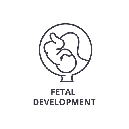 Fetal development thin line icon