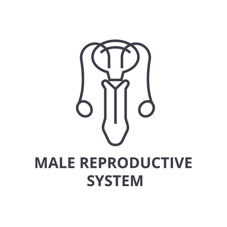 male reproductive system thin line icon, sign, symbol, illustation, linear concept vector