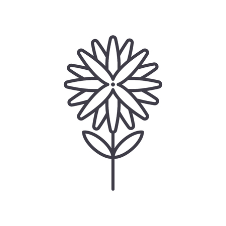 Aster line icon, vector illustration. Aster flat concept sign.