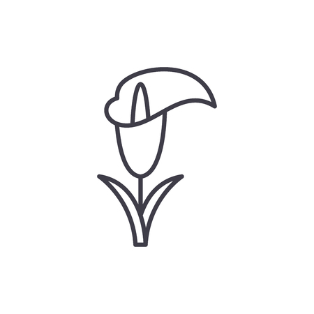 Calla lily line icon, vector illustration. Calla lily flat concept sign.