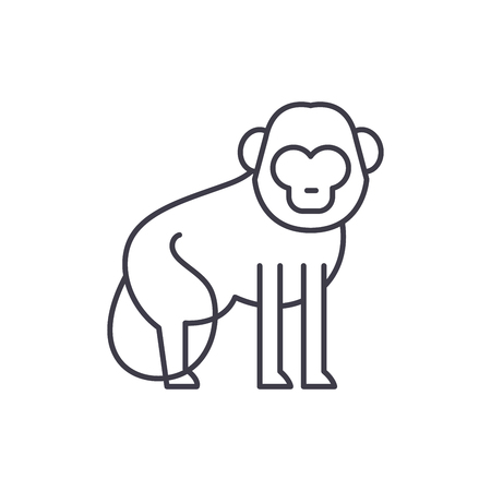 Baboon line icon concept. Baboon vector linear illustration, sign, symbol
