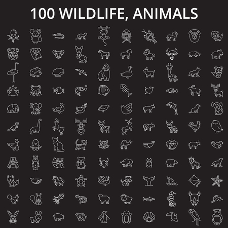 Wildlife, animals editable line icons vector set on black background. Wildlife, animals white outline illustrations, signs,symbols
