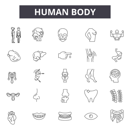 Human body line icons for web and mobile design. Editable stroke signs. Human body outline concept illustrations