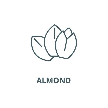 Almond line icon, vector. Almond outline sign, concept symbol, illustration