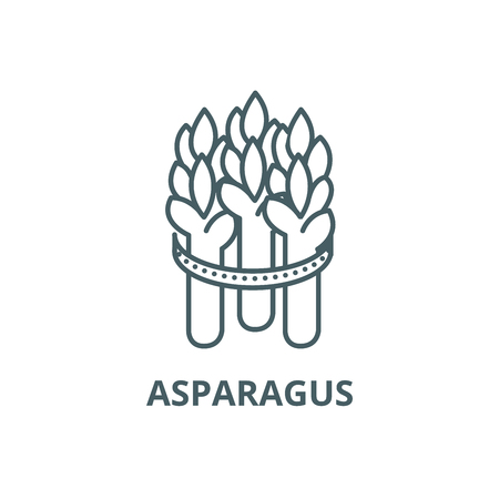 Asparagus line icon, vector. Asparagus outline sign, concept symbol, illustration