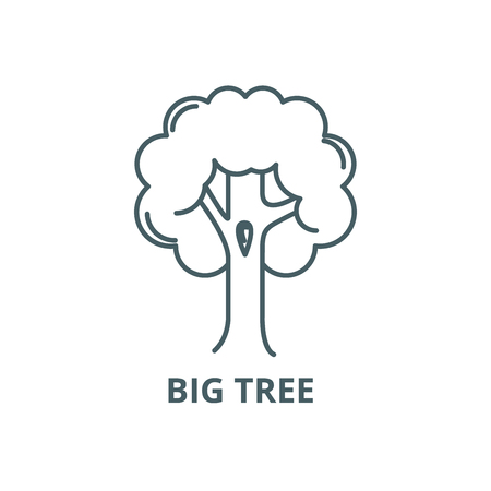 Big tree  line icon, vector. Big tree  outline sign, concept symbol, illustration