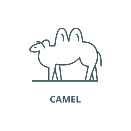 Camel line icon, vector. Camel outline sign, concept symbol, illustration