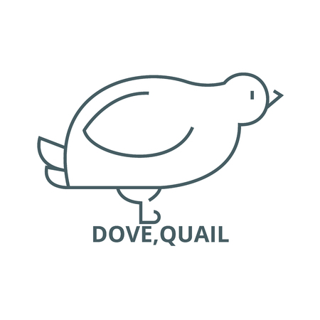 Dove,quail line icon, vector. Dove,quail outline sign, concept symbol, illustration