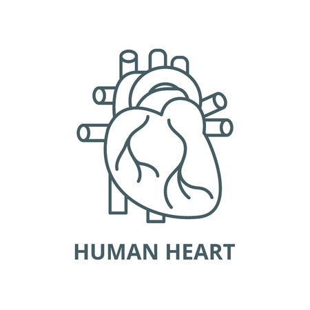 Human heart vector line icon, outline concept, linear sign  イラスト・ベクター素材